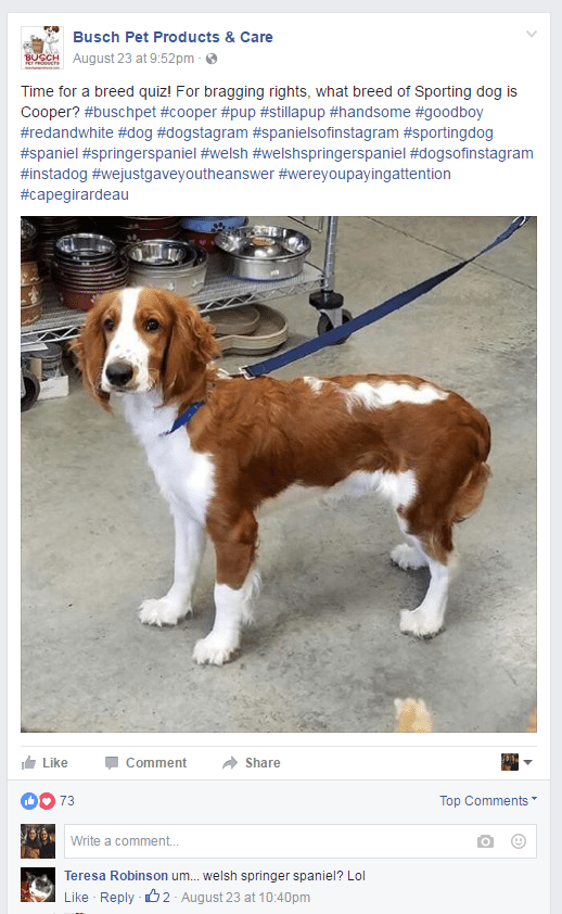 busch-pet-product-facebook-quizz