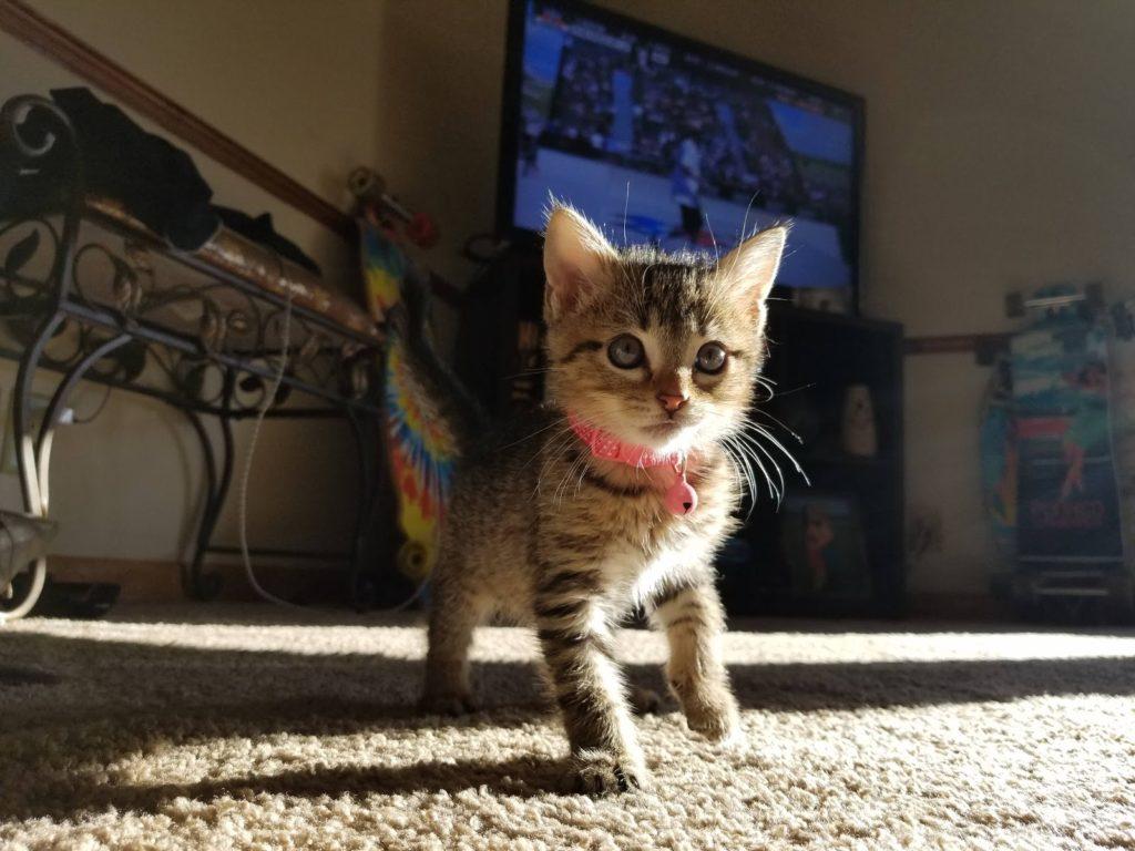 tiny-kitten