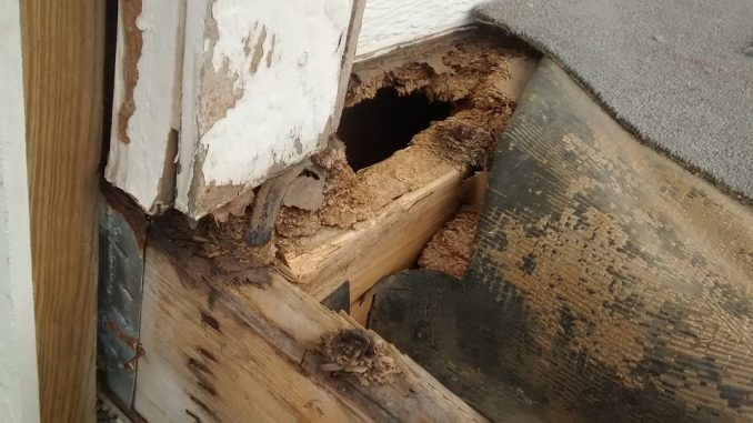 home staging rotting wood