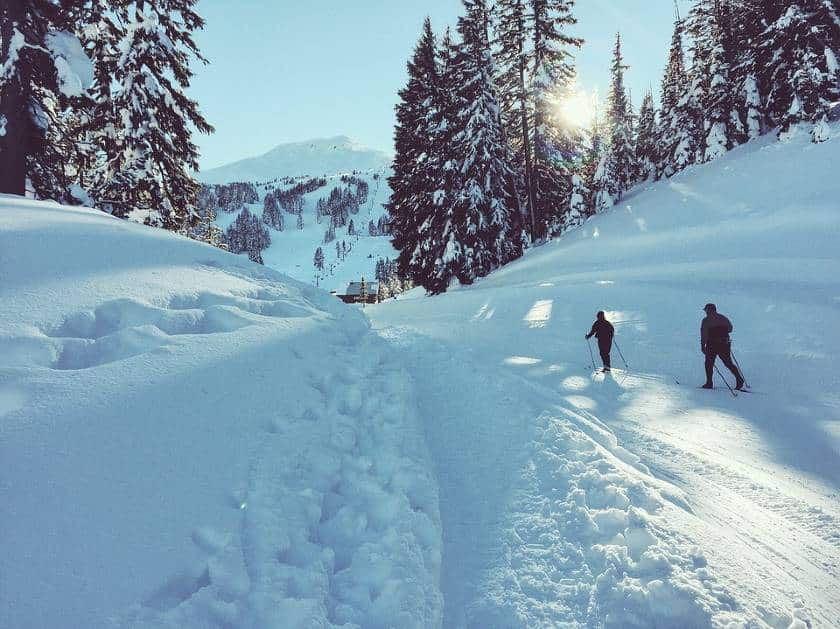 Snowy white forest in winter with skiers