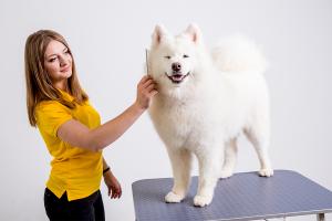 lady groomer gets dog a haircut