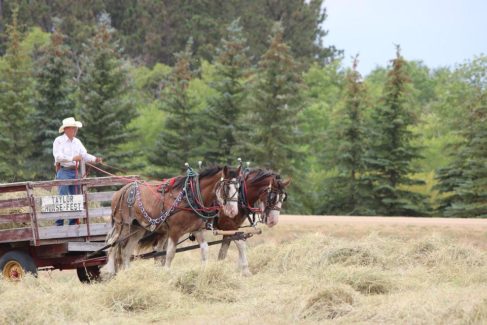 photograph of a horse drawn trailer Rural North Dakota