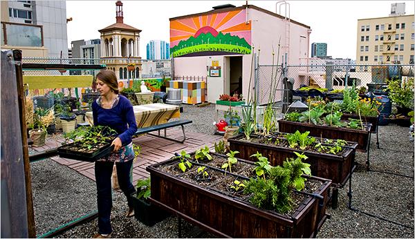 Rooftop farmer