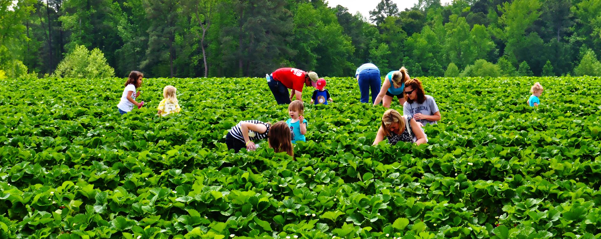 20 Most Profitable Small Farm Ideas in 2019