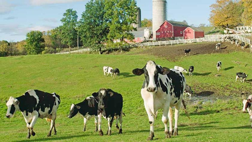 20 Most Profitable Small Farm Ideas