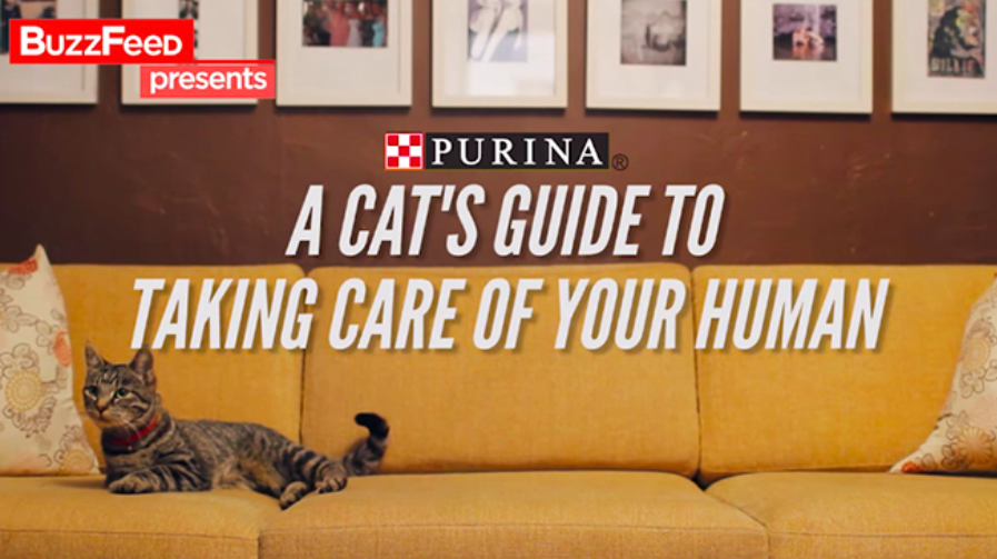 """Title card for """"A Cat's Guide to Taking Care of Your Human"""" by Purina and buzzfeed"""
