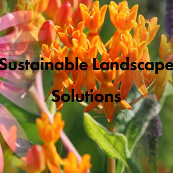 header image from sustainable landscape solutions