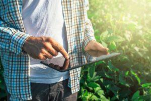 Farmer using a tablet