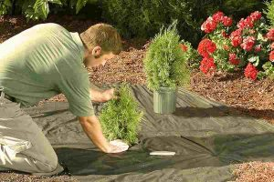 man doing gardening
