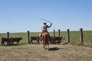 Kansas worker riding a horse